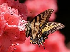 butterfly-108616__180
