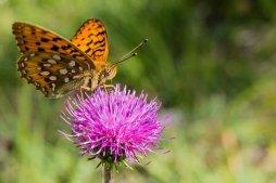 butterfly-2492649__340