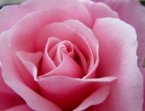 flower-2881585__340