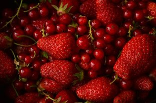 red-berries-2718428__340
