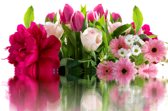 roses-2641199__340