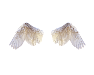 white-wings-2473023__340